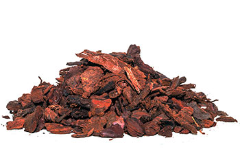 Umbrella pine bark fine 2.5 l.