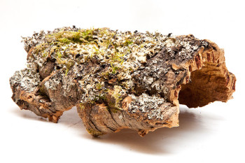 Cork Bark Small
